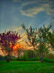 Ed's Orchard