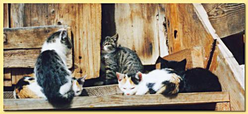 Cat 5 by deelkar