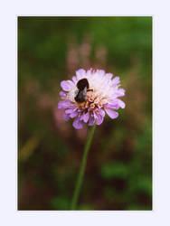 Bumblebee by deelkar