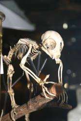 Bones stock