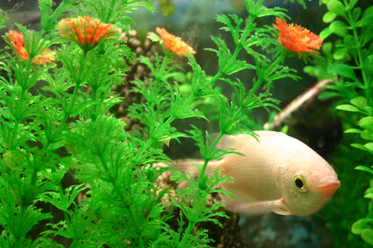Fish stock 1