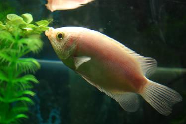 Fish Stock 2