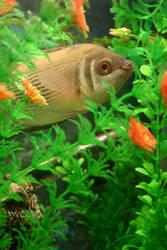 Fish Stock 3