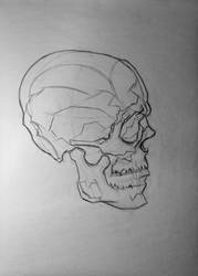 Skull mapping, profile by 93Oasys