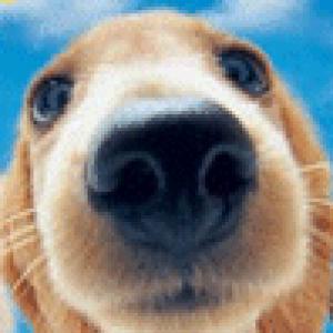 OdPuppy's Profile Picture