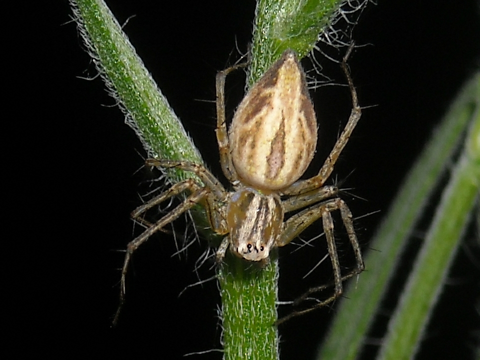 Lynx Spider 4 by UltimateDoomer
