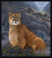 Cougar Country by oomu