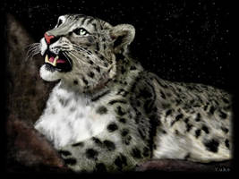 Snow Leopard by oomu
