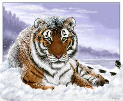 Siberian Tiger in Snow by oomu