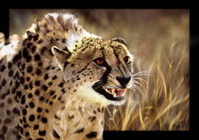 Hunter of the Serengeti by oomu