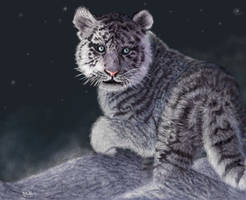 Tiger Cub in Snow by oomu
