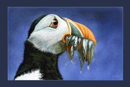 The HUNGRY Puffin by oomu