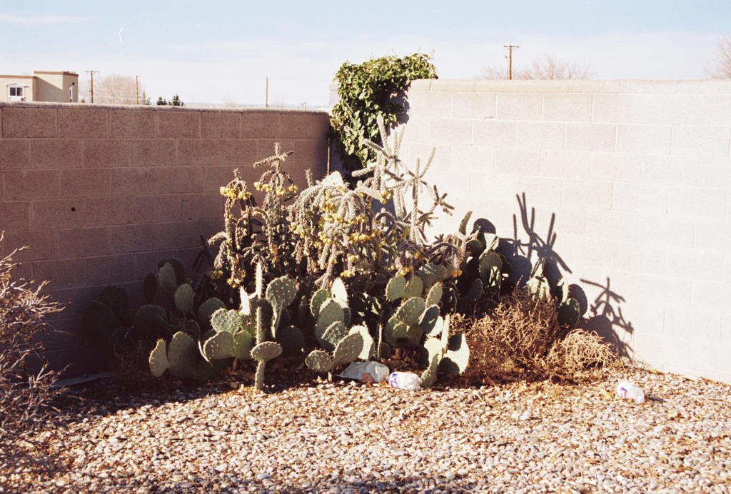Assorted Cactus in a Brick Wall Corner by Texas1964