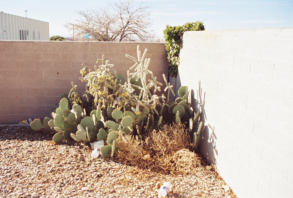Assorted Cactus in a Brick Wall Corner #2 by Texas1964