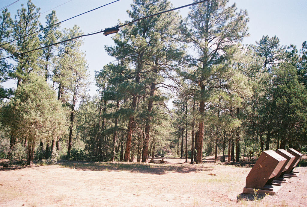 Pines at Pine Flat by Texas1964