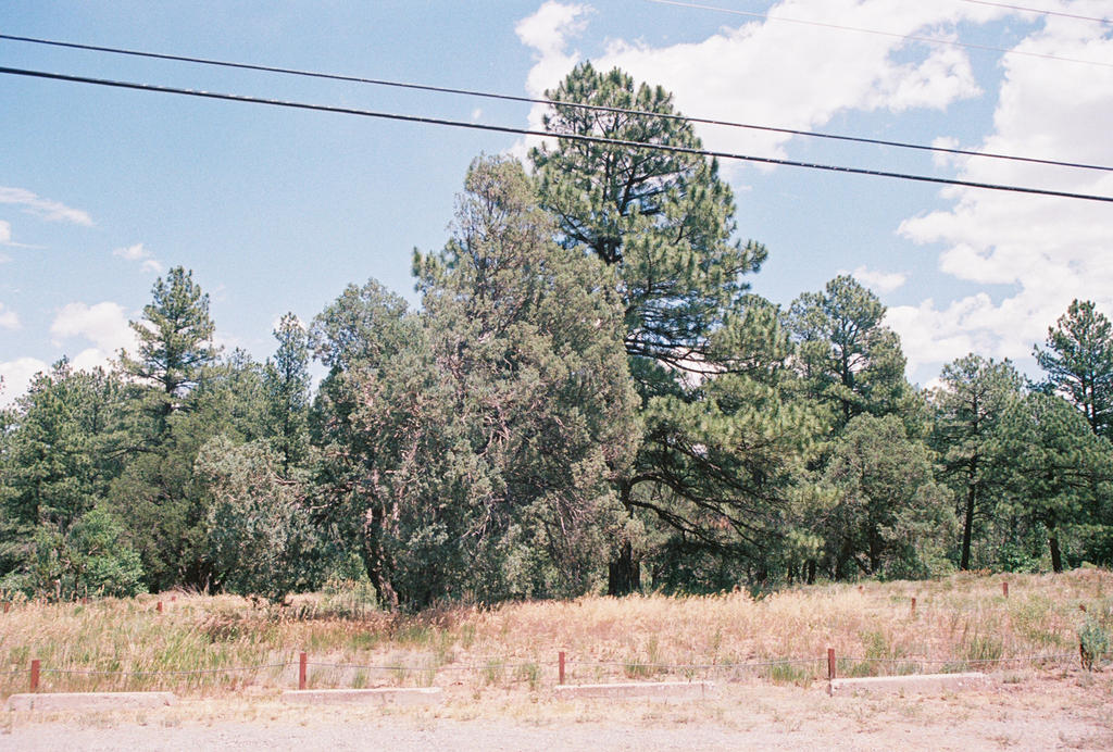 Pines at Pine Flat #3 by Texas1964