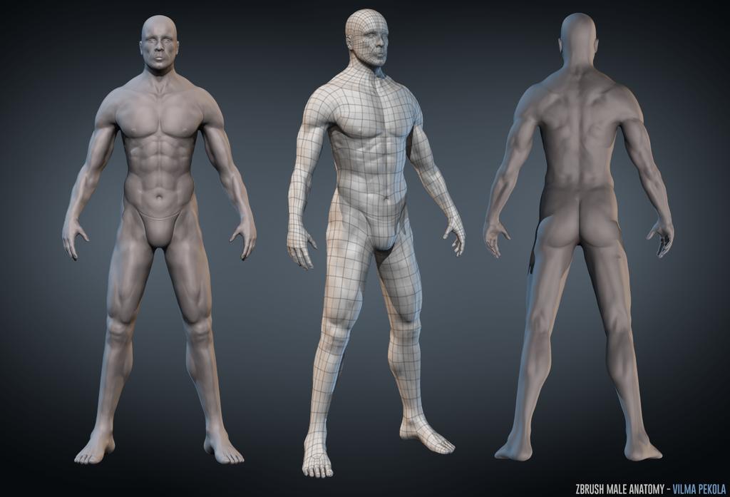 Male Anatomy Zbrush sculpt by Sirtuuna on DeviantArt