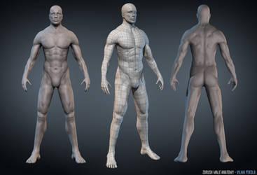 Male Anatomy Zbrush sculpt by Sirtuuna