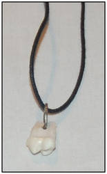 Bear Tooth Necklace by ginsengi