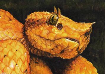 eyelash viper by akireru