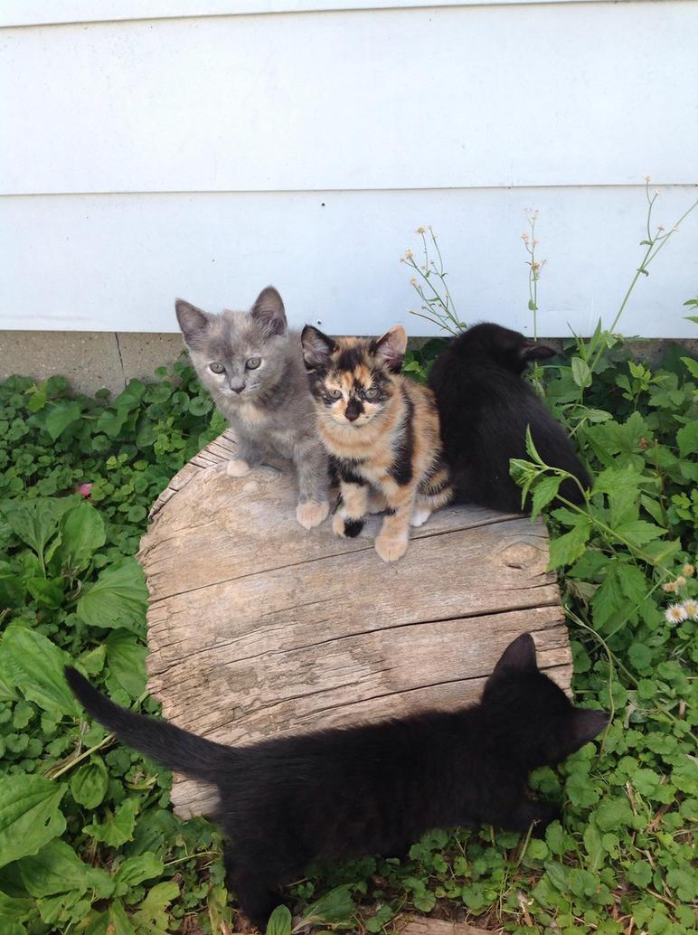 Grecia's Kittens by DarkGoth100