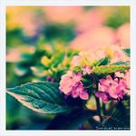 Summer memory by redmaz