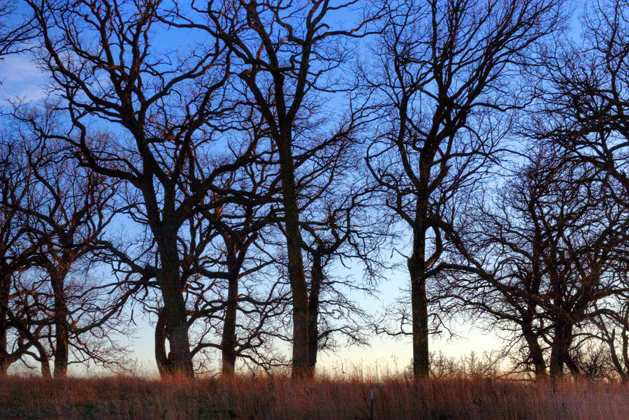 Leafless Trees HDR
