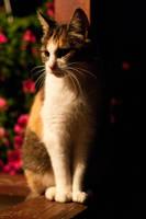 Fanta the cat by gekkoen2