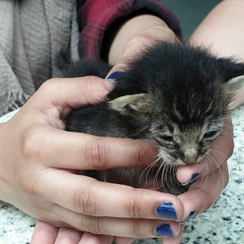 Tiny kitten by Bluegirl123456