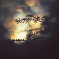 European spruce by CID228