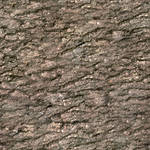 Seamless Tree Bark Texture