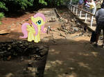 Fluttershy With Iguanas   by SunsetShimmerTrainZ1