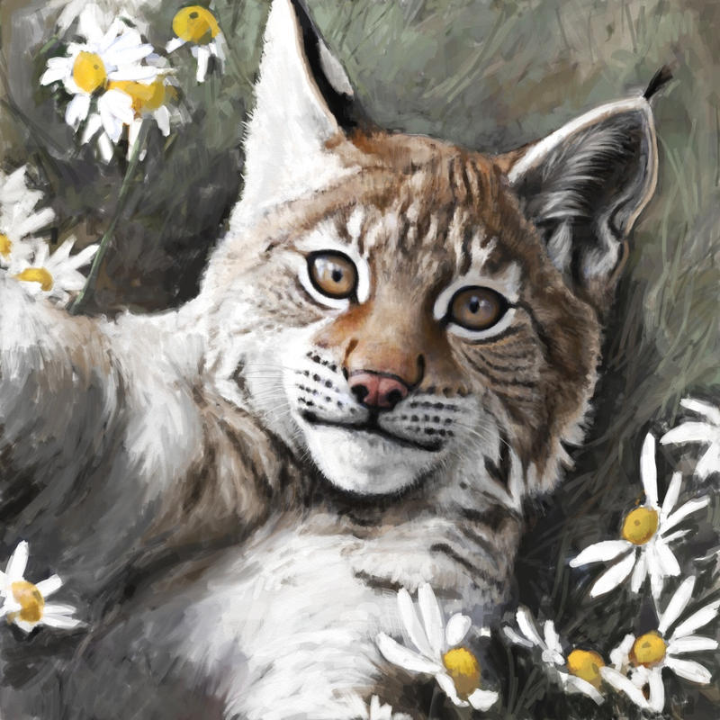 Young lynx by Renum63
