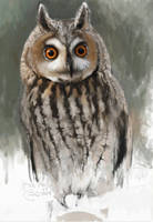 Long-eared owl by Renum63