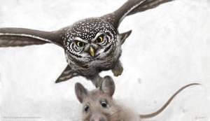 Say your prayers...  (pygmy owl) by Renum63