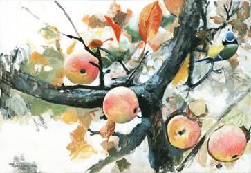 Blue tit in apple tree by Renum63
