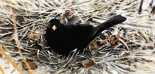 Blackbird study by Renum63