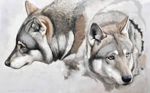 Eurasian wolf by Renum63