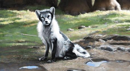 Arctic fox by Renum63