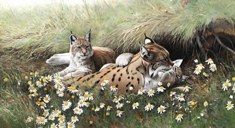 Lynx family by Renum63