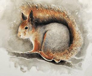 Red squirrel 2 by Renum63