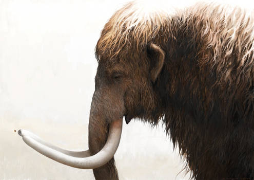 Woolly mammoth and a painted lady