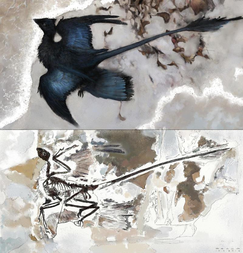 Microraptor fossilising by Renum63