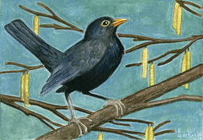 Blackbird by SaskiaDeKorte