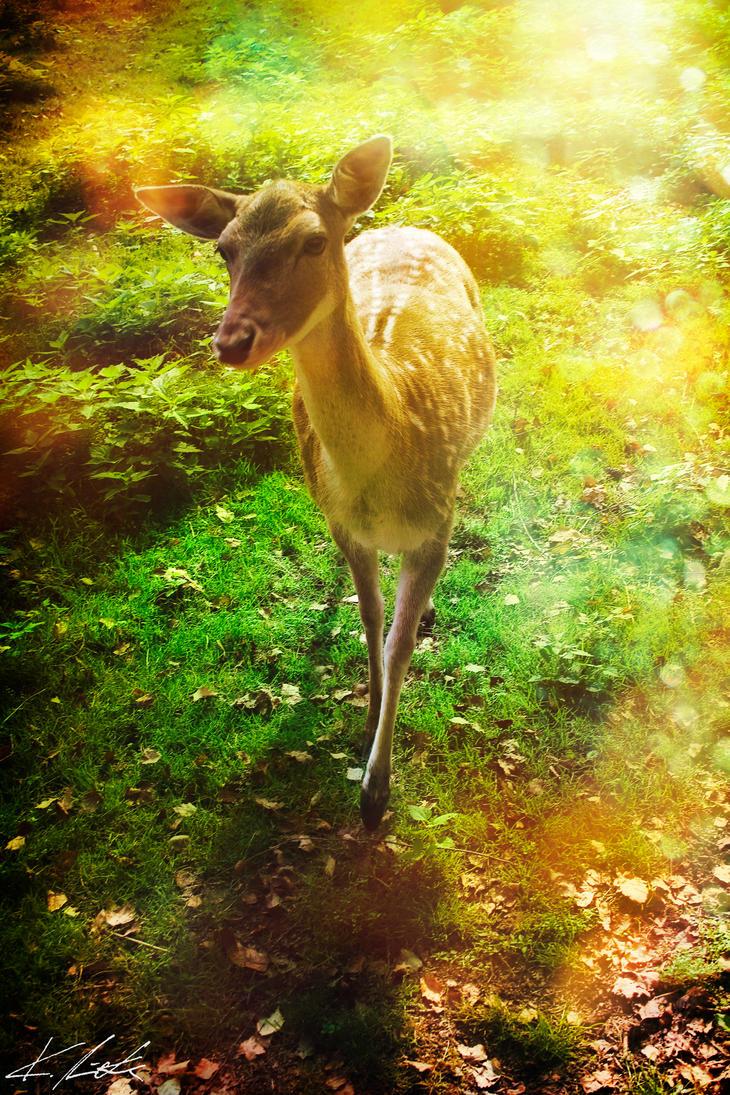 Bambi? by Luxxs