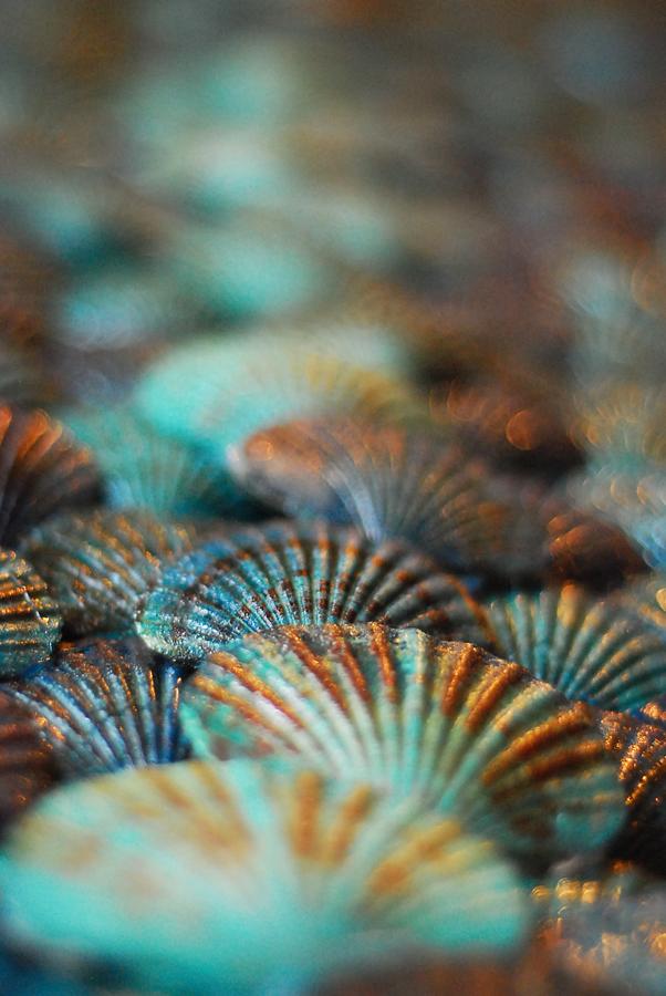 Seashells by myxiedoo