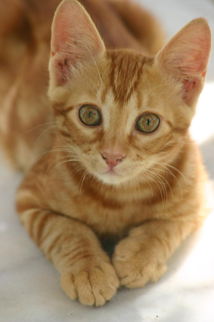 cat by cenkini