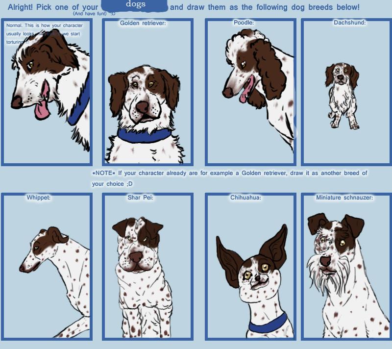 Dog Breed Meme - Violet by Ranshii on DeviantArt