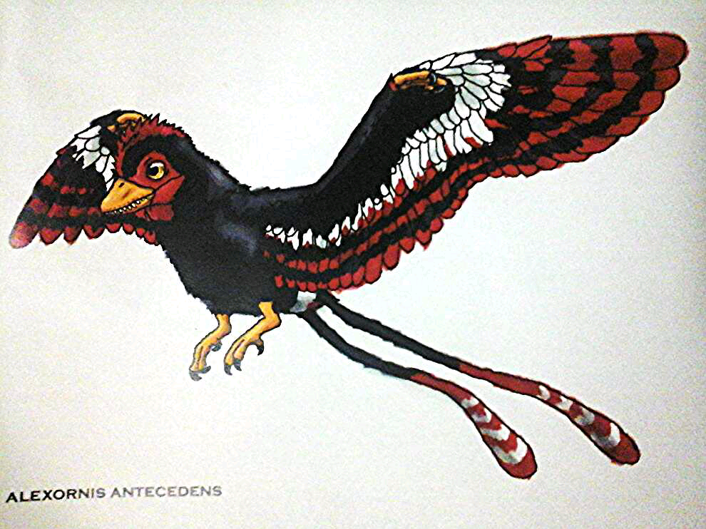 http://fc04.deviantart.net/fs71/f/2014/135/0/6/alexornis_antecedens_by_emperor_zinyak-d7igdn1.png Walking
