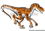 Jurassic Park: Male V.nublariensis